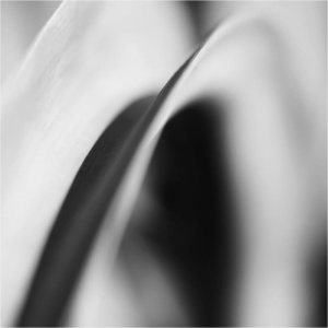 Photo: Byong-Ho Kim; Botanic Abstract 748