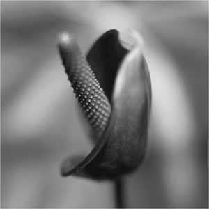 Photo-Byong-Ho Kim; Floral Study 735