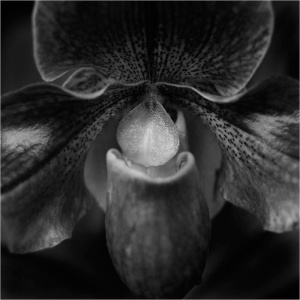 Photo: Byong-Ho Kim; Floral Study 678