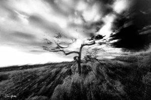 © Pierre Gable 2011